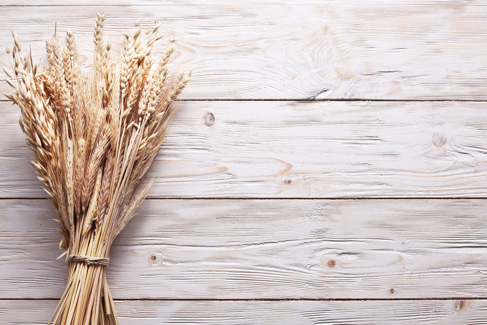 Итоги маркетингового года: топ-10 крупнейших экспортеров зерна из Украины