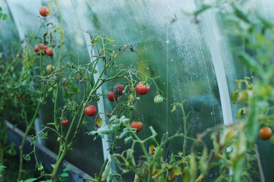 Почти вся украинская органическая продукция продается за рубеж