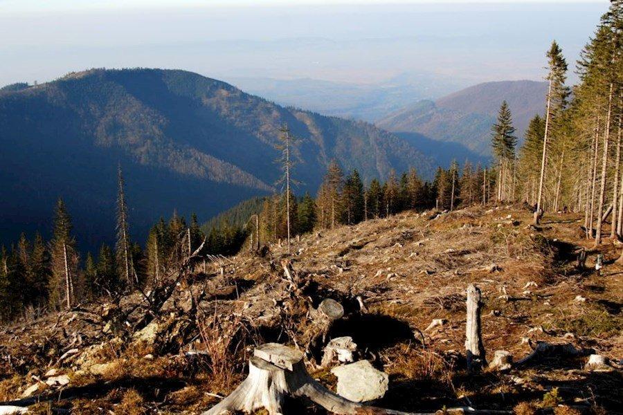 С 2019 года ужесточится наказание за вырубку леса и контрабанду древесины