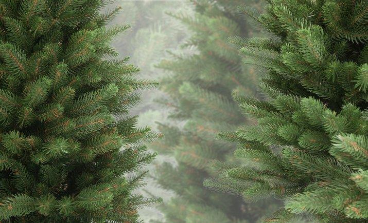 Где в Киеве можно купить новогоднюю елку