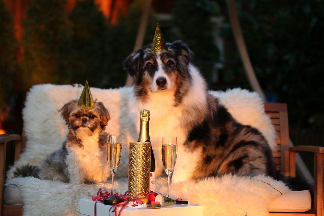 Как найти квартиру на Новый Год — советы эксперта